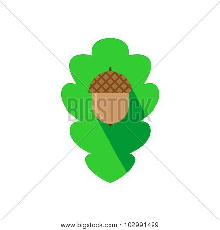 Acorn Sign On The Oak Leaf Background Flat Logo Template.