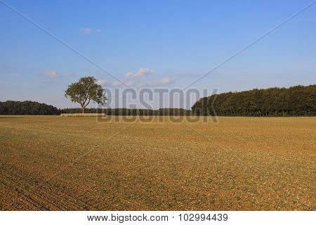 Woodland With Cultivated Field