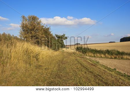 Country Bridleway In Autumn