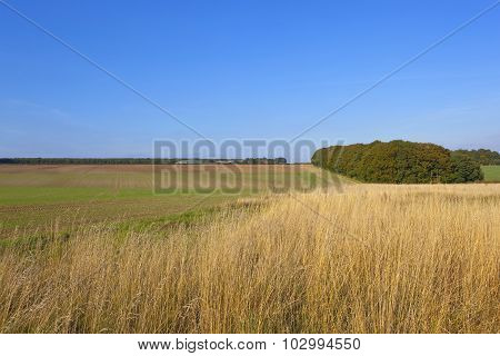 Dry Grass And Small Woodland In Autumn