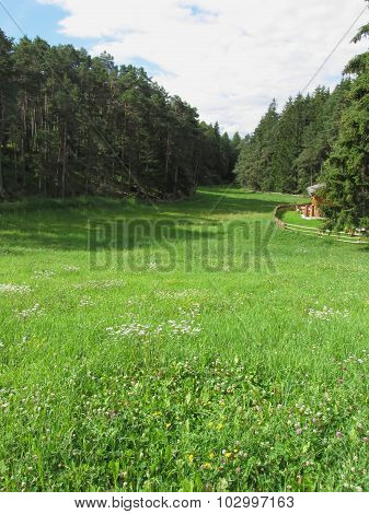 Alpine Landscape With Green Meadow Foreground And Forest With Sky In Background