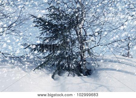 Winter Snow Scenic