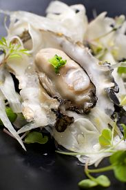 image of oyster shell  - Oyster on the half shell with fennel salad and seaweed - JPG