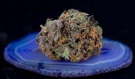 foto of agate  - Close up macro of Indica Strain Grandaddy Purple Medicinal Medical Marijuana on purple agate stone - JPG