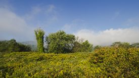 stock photo of goldenrod  - Early Fall Meadow with Goldenrod - JPG