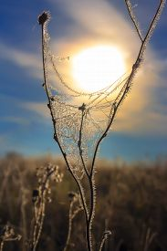 picture of novosibirsk  - The grass is covered with frost against the rising sun - JPG