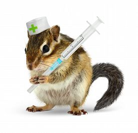 picture of chipmunks  - Veterinary concept funny chipmunk with syringe isolated on white - JPG