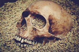 pic of morbid  - Human skull and rice paddy still life - JPG