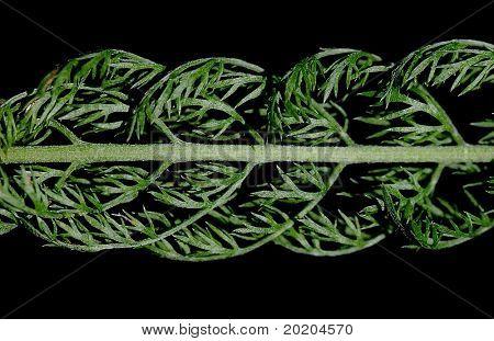 wilting fine green plant against black background