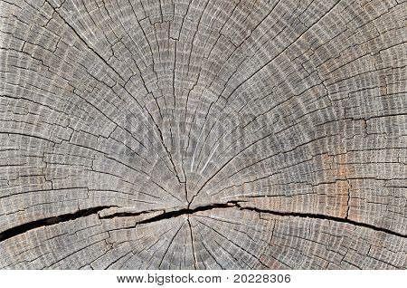 close-up of a tree trunk showing growth rings
