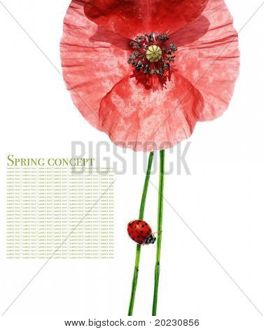 spring concept. flora and lady bug against white background.