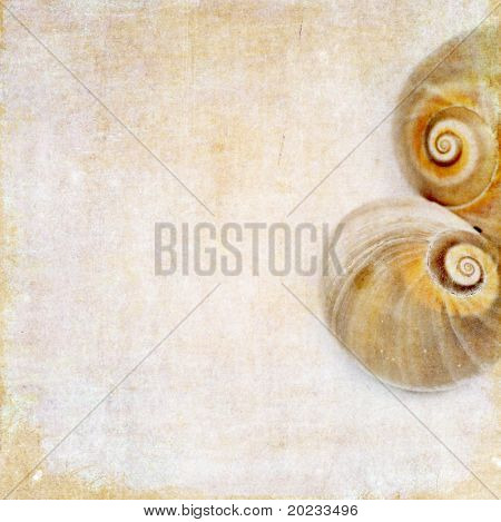 lovely background image with sea shells. very useful design element.
