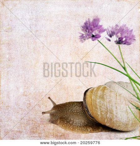Stock Photo: lovely background image with snail and floral elements