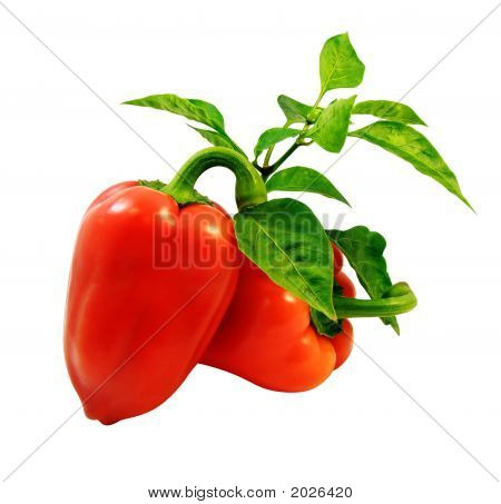 Red Peppers With Green Leafs Isolated