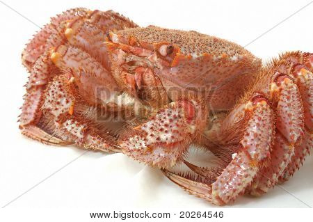 Alive Alaskan king crab  on the white table cloth in restaurant