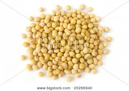 soybean isolated a white