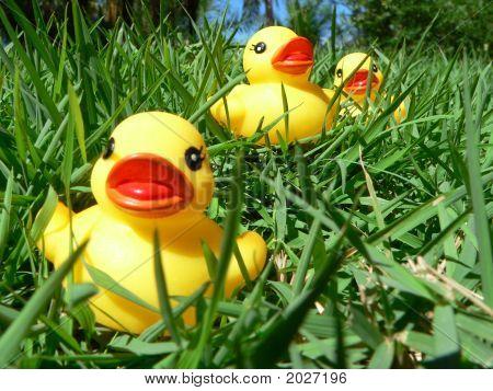 3 Rubber Ducklins