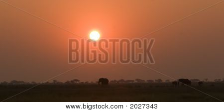 Siluetas de elefante