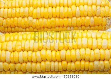 Corn-cob, grains of corn close up, macrophotography