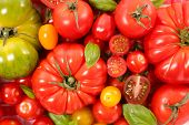 assorted different tomatoes poster