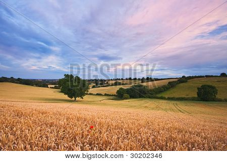 Sunset Over A Summer Landscape