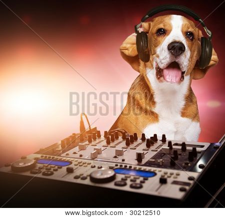 Beagle dog wearing headphones behind DJ mixer.