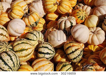 Lots of gourds