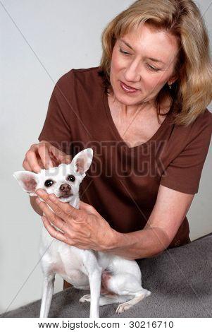 Dog Massage Therapist