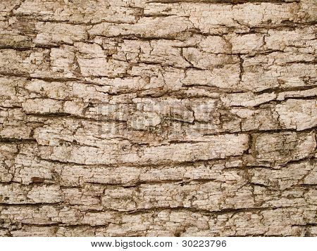 Macro Texture - Wood - Tree Bark