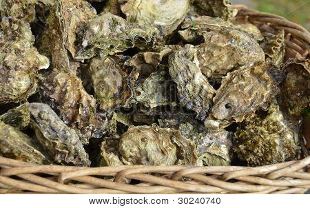 Basket or raw oysters