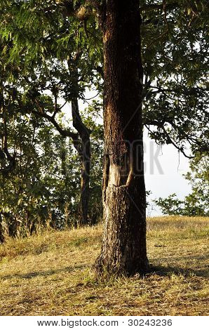 Tree Wood Hill Trunk Outdoor Nature