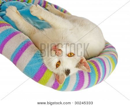 White Tomcat In His Cat Bed
