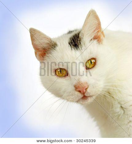 Head Of A White Tomcat