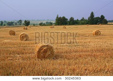 Harvest Time In Countryside