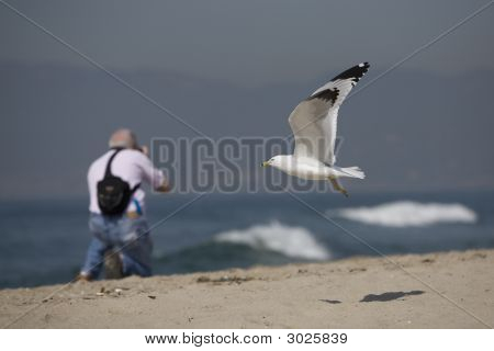 Seagull And Photographer