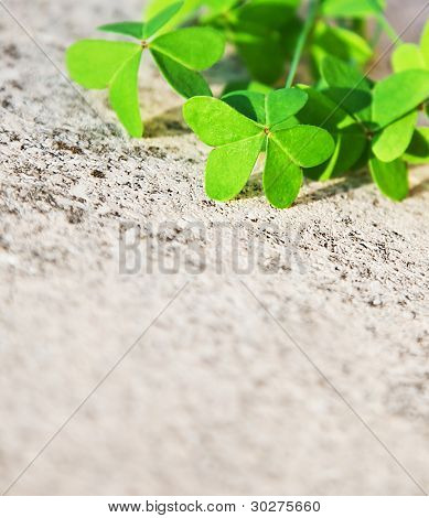 Fresh clover leaves over stone, green spring floral border, lucky shamrock, St.Patrick's day holiday symbol, abstract natural background