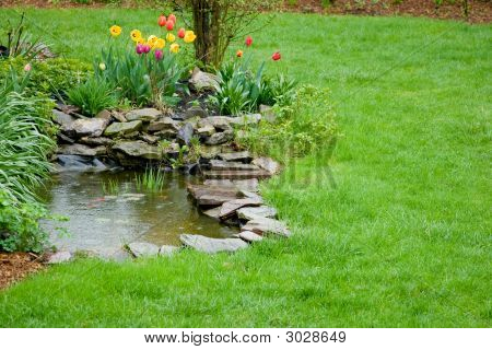 Garden Pond With Raindrops
