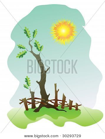 Oak vector illustration