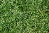 pic of football pitch  - Shot of a grass lawn in the sunshine - JPG