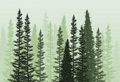 Vector Forest Background. Green Spring Or Summer Woods, Nature Landscape With Evergreen Coniferous T poster