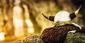 Equipment Of Viking Or Barbarian Warrior Outdoor On Nature. Viking Helmet On Brown Fur Of Animal In  poster