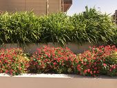 Pink Flowers Blooming Near Pavement. Red Flowers Garden Walkway. poster