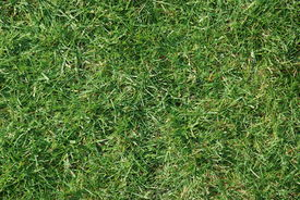stock photo of football pitch  - Shot of a grass lawn in the sunshine - JPG