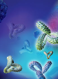 stock photo of monoclonal  - Computer artwork of antibodies  - JPG