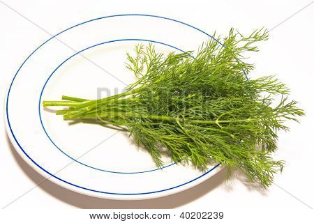 Dill (fennel)
