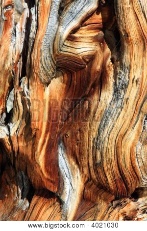 Bristlecone Pine Abstract Wood Patern
