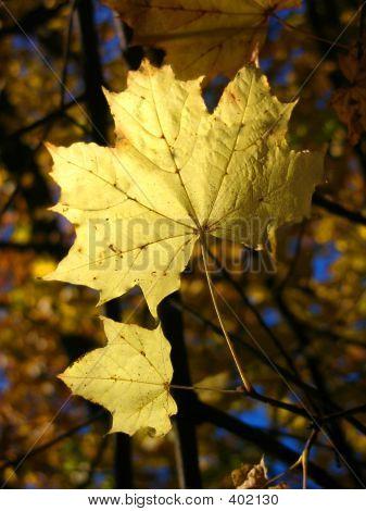Herbst leaf