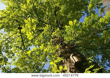 Tree and bird house