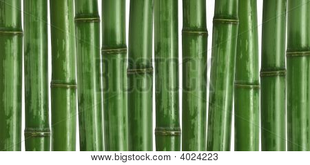 Hard Bamboo Background