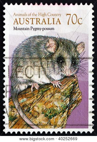 Postage stamp Australia 1990 Common Brushtail Possum